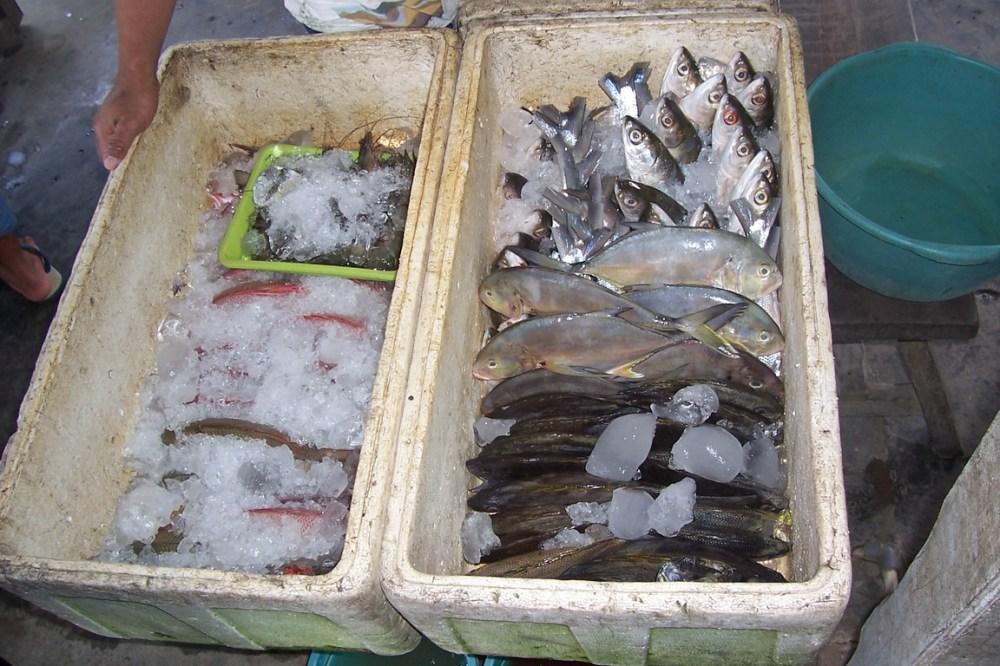 pilih-ikan-sendiri